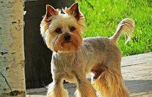 стрижка собак в Лобне с выездом и на дому