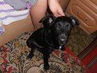 Фотография в Потерянные и Найденные Найденные Нашелся щенок черного цвета (мальчик). Щенок в Магнитогорске 0