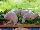 Увидеть foto Грызуны Кролики и мясо кролика 33875782 в Магнитогорске