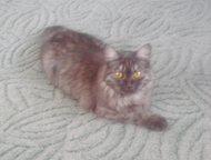 Кот На Вязку кошечка 1 год ищет кота на вязку