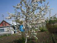 Продам сад Строитель 1 сад№2 (в сторону озера Соленое) Сад ухоженный. Есть дом,