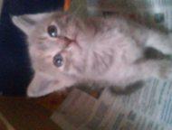 Отдам 2 красивых котят-девочек в хорошие руки Отдам очень красивых котят в добры
