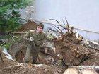 Скачать бесплатно фото Другие строительные услуги Земляные работы, спил деревьев, корчевание пней 32668405 в Майкопе