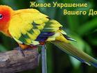 Изображение в Домашние животные Другие животные Питомник певчих и декоративных птиц Яркий в Малоярославце 500