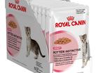 Скачать изображение Корм для животных Продам влажный корм для котов 52548473 в Минске