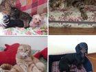 Просмотреть foto Отдам даром Домашняя передержка собак мелких и средних пород, кошек 32862391 в Москве