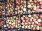 Изображение в Домашние животные Растения Наша фирма предлагает свежие яблоки красных в Москве 0
