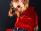 Смотреть изображение Услуги для животных Одежда для собак оптом и в розницу 35904585 в Москве