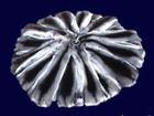 Смотреть foto Ювелирные изделия и украшения Шкурки шиншиллы европейского качества 37596924 в Москве