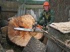Фото в Услуги компаний и частных лиц Разные услуги Вам мешает дерево на участке или кладбище? в Москве 1500