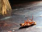 Свежее foto Разные услуги Как избавиться от запаха отравы в квартире, после уничтожения клопов, блох, тараканов? 38756155 в Москве