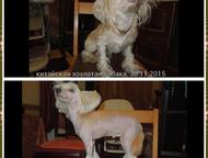 Стрижка собак Стрижка (тримминг) Вашего питомца у Вас на дому качественно и недо