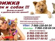 Стрижка кошек и собак, Выезд на дом Предлагаем к вашему Вниманию! свои услуги Ст