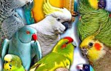Приютим вашу птичку и окружим заботой и любовью Приму в дар средних и крупных попугаев