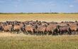 Все овцы котные (беременные) 300 голов.