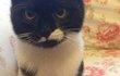 Безумно любвиобильная котенок-девочка) Китлер