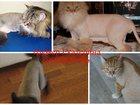 Фото в Домашние животные Услуги для животных Профессиональная стрижка и уход за шерстью в Москве 0
