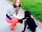 Просмотреть фотографию  Дрессировка собак 32498580 в Москве