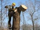 Новое изображение  Удаление деревьев 32505653 в Дедовске
