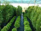 Изображение в   Питомник растений Каверино плантс выращивает в Москве 1