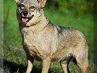 Фото в Собаки и щенки Продажа собак, щенков Ее Зовут Золушка. Небольшая, молоденькая в Москве 0