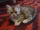 Фотография в   Отдам в хорошие руки котят, кошки. На данный в Новосибирске 0