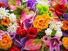 Изображение в   Существует много легенд о происхождении орхидей. в Москве 2450