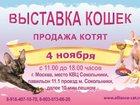 Изображение в Кошки и котята Выставки кошек Приглашаем 4 ноября на выставку кошек Осенний в Москве 150