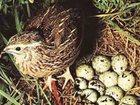 Фотография в Домашние животные Корм для животных Состав: пшеница, ячмень, шрот подсолнечный, в Москве 35