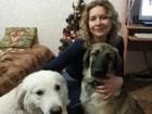 Изображение в   Готова взять на передержку Вашу собаку или в Москве 250