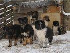 Изображение в   13 щенков, есть девочки и мальчики, срочно в Москве 0