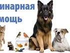 Фото в   Ветеринарная помощь 911   -24часа   -Вызов в Северодвинске 200