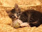 Фото в   Очаровательные котята Василек и Витек ищут в Москве 0