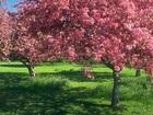 Смотреть фото  Расчистка участков, удаление деревьев, покос травы, обработка от сорняков, обработка от клещей, уничтожение короеда, вспашка земли, бурение скважины на воду, 35511554 в Серпухове