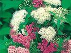 Изображение в   Интернет магазин растений Parco Plants предлагает в Москве 0