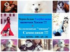 Фото в Собаки и щенки Продажа собак, щенков Продаются щеночки хаски от прекрасных производителе! в Москве 8000