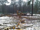 Свежее изображение  Удаление аварийных деревьев частями 36226885 в Сертолово