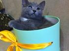 Изображение в   Милые котодетки очень хотят найти своих мам-пап. в Москве 0