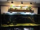 Фотография в   Производим аквариумы, террариумы, светильники в Архангельске 0