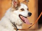 Скачать бесплатно foto  Прекрасный пес Бублик ищет дом! 37337014 в Москве