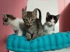 Фото в   Три маленьких котика, возраст 1, 5 месяца, в Москве 0