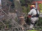 Фотография в   Хотите спилить дерево? Сделаем это уже сегодня! в Москве 650