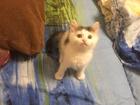 Фото в Кошки и котята Продажа кошек и котят Добрый, любопытный, громко мурлыкающий, пушистый, в Москве 500