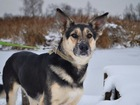 Увидеть foto  Самая обаятельная собачка Терри ищет дом, 37623303 в Москве