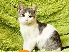 Фото в   Знакомьтесь, котенок Арчи) Мальчик, возраст в Москве 0