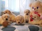 Фото в Собаки и щенки Продажа собак, щенков Близится праздник, которого все ждут с нетерпением, в Москве 35000