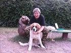Увидеть изображение Услуги для животных Дрессировка собак в Москве 37762582 в Москве