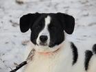 Свежее foto  Молоденькая собака Тая ищет дом! 37788866 в Москве