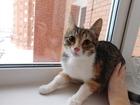 Изображение в   Не секрет, что трехцветные кошки приносят в Дмитрове 0