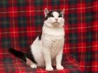 Увидеть foto  Невероятно красивый котик Вася-Василек ищет дом, 37949624 в Москве
